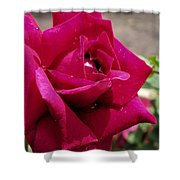 Red Rose Up Close Shower Curtain by Thomas Woolworth