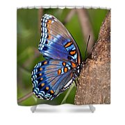 Red Spotted Purple Butterfly Shower Curtain by Sandy Keeton