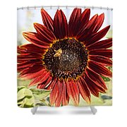Red Sunflower And Bee Shower Curtain by Kerri Mortenson