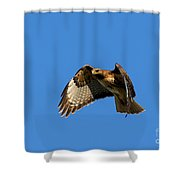 Red-tail Hover Shower Curtain by Mike  Dawson