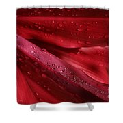 Red Ti The Queen Of Tropical Foliage Shower Curtain by Sharon Mau