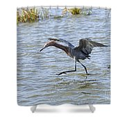 Reddish Egret Canopy Feeding Shower Curtain by Louise Heusinkveld