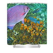 Reef Life Shower Curtain by John Malone