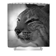 Reflecting Bobcat... Shower Curtain by Christena  Stephens