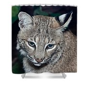 Reflective Bobcat Shower Curtain by John Haldane