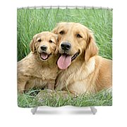 Relaxing Retrievers Shower Curtain by Greg Cuddiford