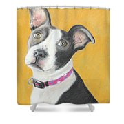 Rescued Pit Bull Shower Curtain by Jeanne Fischer