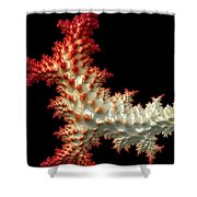 Resembling Coral  Shower Curtain by Heidi Smith