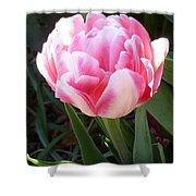 Resplendent Cherry Pink Tulip Shower Curtain by Lingfai Leung