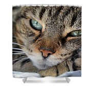 Rest Shower Curtain by Susan Smith