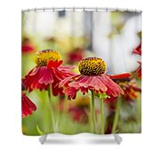 Rhapsody Shower Curtain by Ivy Ho