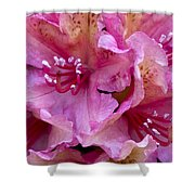 Rhododendron Brasilia Shower Curtain by Frank Tschakert