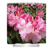 Rhododendron Garden Art Prints Pink Rhodie Flowers Shower Curtain by Baslee Troutman