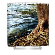 River Through Woods Shower Curtain by Elena Elisseeva
