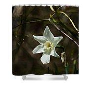Roadside White Narcissus Shower Curtain by Rebecca Sherman