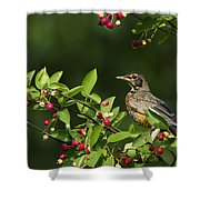 Robin And Berries Shower Curtain by Mircea Costina Photography