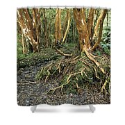 Roots Shower Curtain by James Brunker