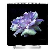 Rose Awakening Floral Shower Curtain by Jennie Marie Schell