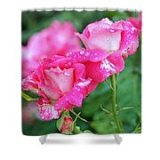 Rose Bonbons Shower Curtain by Rona Black