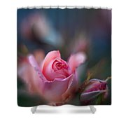 Roses Scented Dream Shower Curtain by Mike Reid