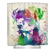Rottweiler Splash Shower Curtain by Aged Pixel