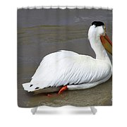 Rough Billed Pelican Shower Curtain by Alyce Taylor