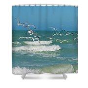 Royal Tern Frenzy Shower Curtain by Kim Hojnacki