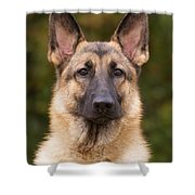 Sable German Shepherd Dog Shower Curtain by Sandy Keeton