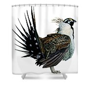 Sage Grouse  Shower Curtain by Anonymous
