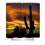 Saguaro Silhouette  Shower Curtain by Robert Bales