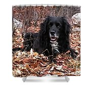 sammi smiling in leaves Shower Curtain by Randi Shenkman