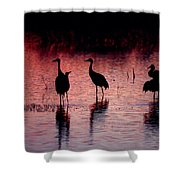 Sandhill Cranes Shower Curtain by Steven Ralser