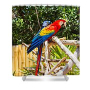 Scarlet Macaw Shower Curtain by John Bailey