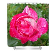 Scented Rose Shower Curtain by Ramona Matei