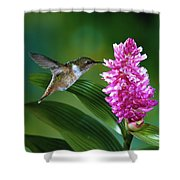 Scintillant Hummingbird Selasphorus Shower Curtain by Michael and Patricia Fogden