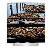 Sea Lions At Pier 39  Shower Curtain by Garry Gay