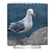 Seagull Shower Curtain by Sebastian Musial