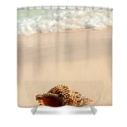 Seashell And Ocean Wave Shower Curtain by Elena Elisseeva