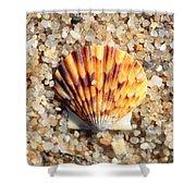 Seashell On Sandy Beach Shower Curtain by Carol Groenen