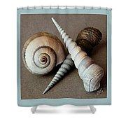 Seashells Spectacular No 24 Shower Curtain by Ben and Raisa Gertsberg