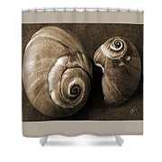 Seashells Spectacular No 6 Shower Curtain by Ben and Raisa Gertsberg