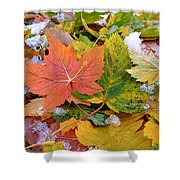 Seasonal Mix Shower Curtain by Rona Black