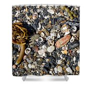 Seaweed And Shells Shower Curtain by Steven Ralser