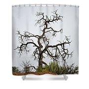 Sedona Landscape Vii Shower Curtain by Dave Gordon