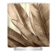 Sepia Leaves Shower Curtain by Cheryl Young