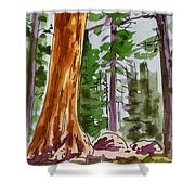 Sequoia Park - California Sketchbook Project  Shower Curtain by Irina Sztukowski