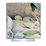Shells In Pastels Shower Curtain by Danielle  Parent
