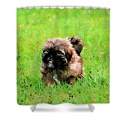 Shih Tzu Puppy Shower Curtain by Darren Fisher