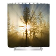 Shining Through Shower Curtain by Peggy Collins