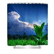 Shining Through Shower Curtain by Ryan Crane